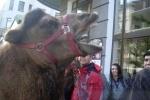 Зоопарк в Петербурге так и останется самым маленьким в мире
