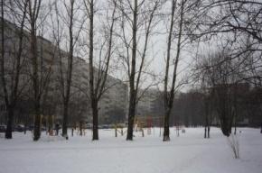 В Петербурге 16 скверов отдадут «под нож» реноваторов