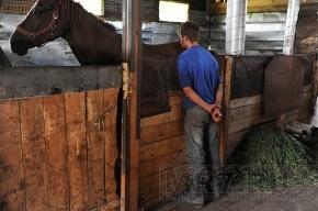 В Сестрорецке конюшня сгорела вместе с лошадьми