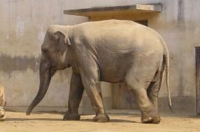 В Екатеринбургском цирке слонов спасают  от морозов вином и водкой