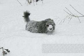 Снег и противный ветер придут в Петербург