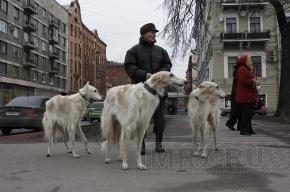 Смольный согласовал шествие с собаками по центру города