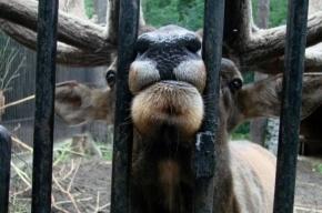 Новый зоопарк: планы и реальность