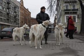 Петербургские зоозащитники собираются на пикет против догхантера