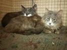 Фоторепортаж: «Выжившие кошки»
