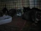 Выжившие кошки: Фоторепортаж