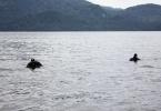 Поисковые работы на Телецком озере на Алтае: Фоторепортаж