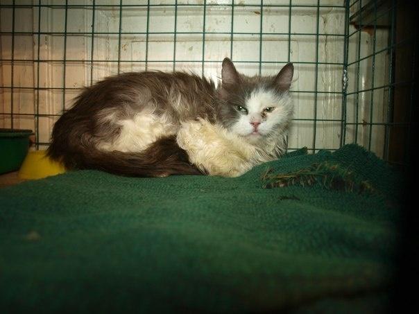 Выжившие кошки: Фото