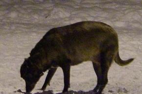 В Купчино  девять собак были зверски замучены и расстреляны садистами