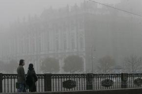 Синоптики обещают дожди и туманы в Петербурге