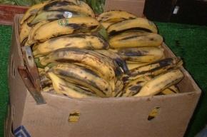 В России напишут закон против фанатов, бросающих бананы в футболистов