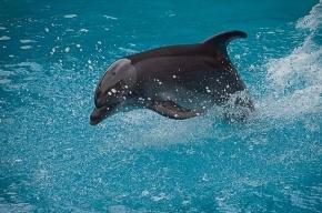 Дельфинов, застрявших во льдах Азовского моря, спасут грузовиками
