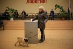 Фоторепортаж: «Выборы в Петербурге. 4 декабря 2011»