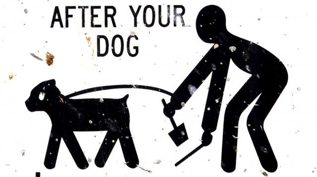 туалеты для собак: Фото