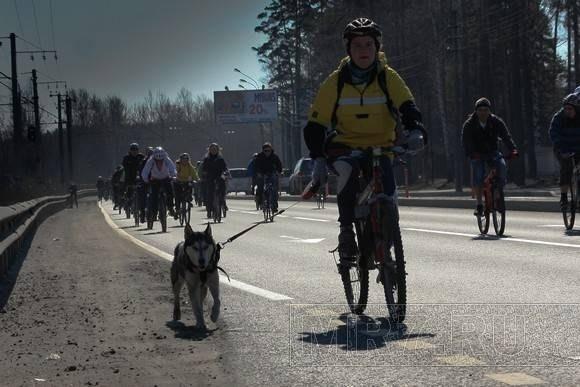 Велосипеды в Петербурге: Фото