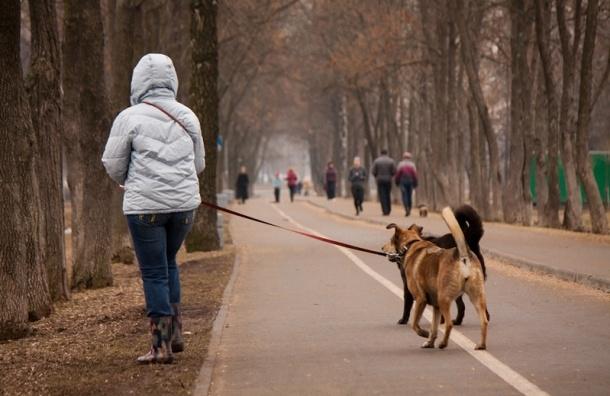 В Петербурге идет война за велодорожки: пешеходы против велосипедистов