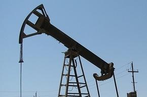 Экологи подсчитывают ущерб из-за разлива нефти в Ненецком АО