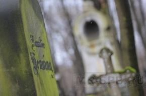 Могилы петербуржцев будут поливать химией