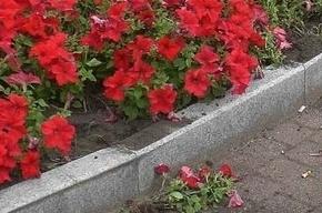 Петербург потратит почти 15 млн. рублей на вазоны для цветов