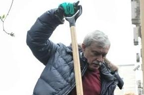 Полтавченко посадил рябину во дворе дома на набережной Робеспьера