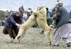 Фоторепортаж: «Страшные собаки»