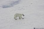 Белый медвежонок: Фоторепортаж