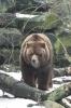 медведь: Фоторепортаж