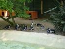 пингвины: Фоторепортаж