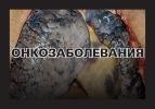 Устрашающие картинки на пачках сигарет: Фоторепортаж