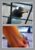 Фоторепортаж: «пингвины»