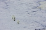 Фоторепортаж: «Белый медвежонок»