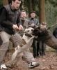 Страшные собаки: Фоторепортаж