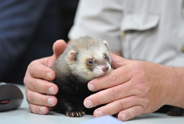 фото харьков животное переду