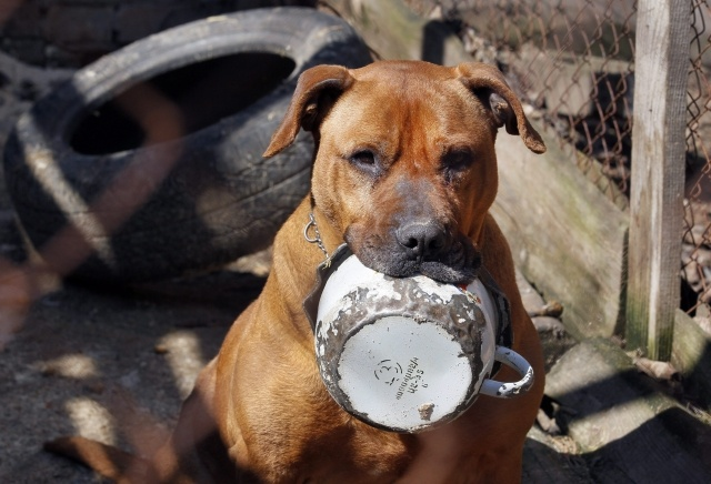 Страшные собаки: Фото