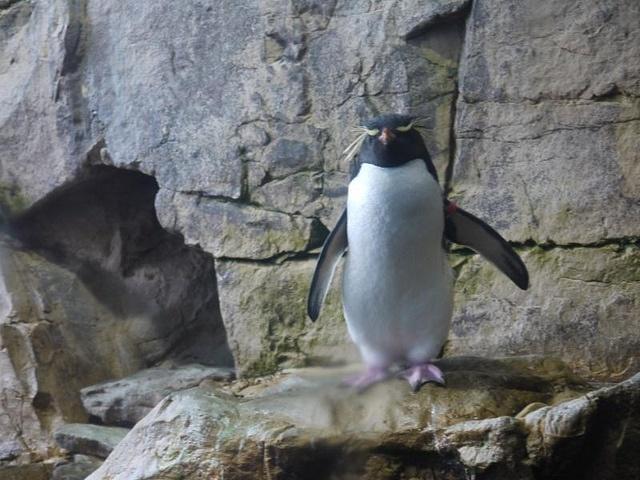 пингвины: Фото