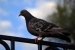 Петербуржца, который заживо сжег голубя, поняли и простили