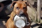 Явлинский просит Полтавченко прекратить травлю собак