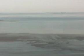В Ленинградской области нефть вытекла в реку