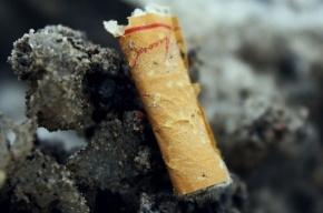 Средняя цена сигарет вырастет в пять раз – до 150 рублей