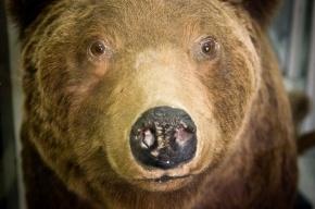 На Камчатке два медведя напали на человека и разорвали его