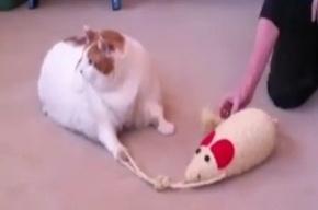 Самый толстый кот мира умер от легочной недостаточности