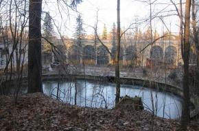 В Красносельском районе 4-летний мальчик утонул в пруду