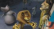 Фоторепортаж: «Мадагаскар 3»