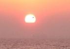 Прохождение Венеры по диску солнца (фото Flickr): Фоторепортаж
