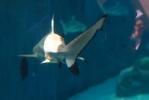 акулы: Фоторепортаж