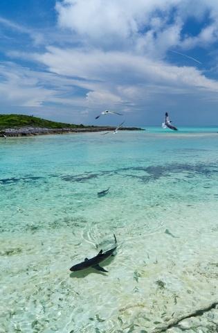 акулы: Фото