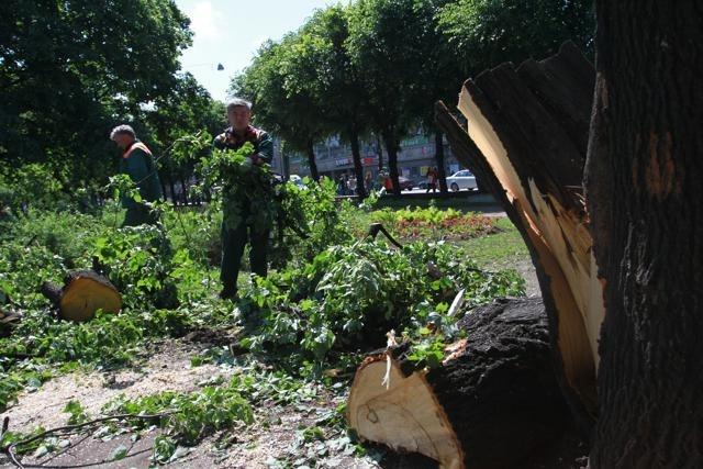 Последствия урагана в Петербурге, 18 июня 2012: Фото