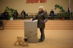 В Петербурге приняли новый закон о выборах губернатора