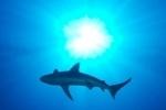 Акулы сорвали кубок России по серфингу во Владивостоке