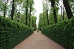 Летний сад в Петербурге вновь закрыт: ждут хорошей погоды